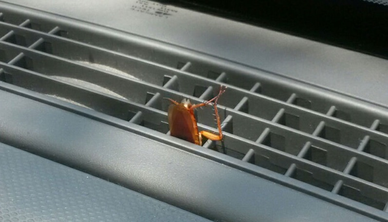 How to get roaches out of car?   CAR magazine